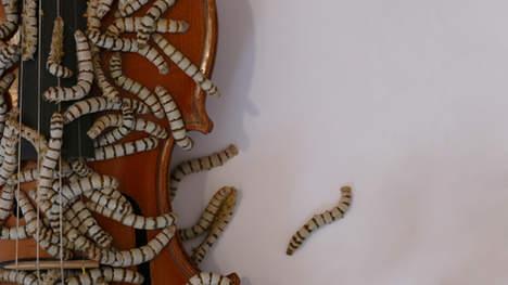 Silkworm Violin