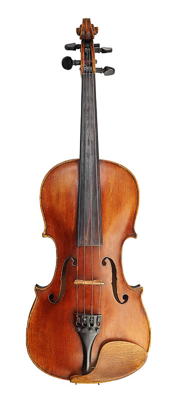 Violin (fiddle) front view isolated on w