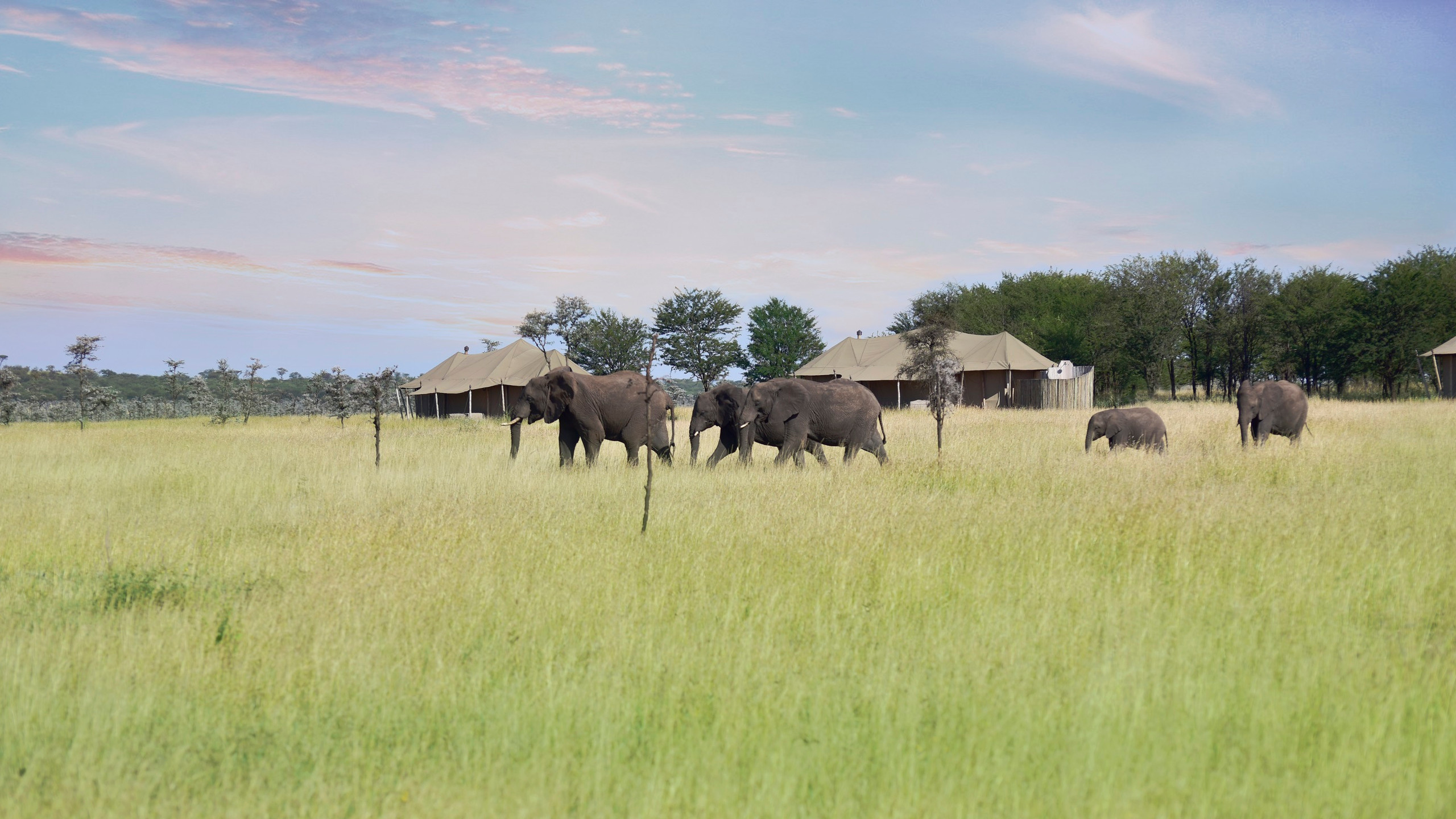 One_Nature_elephant_sighting_klein