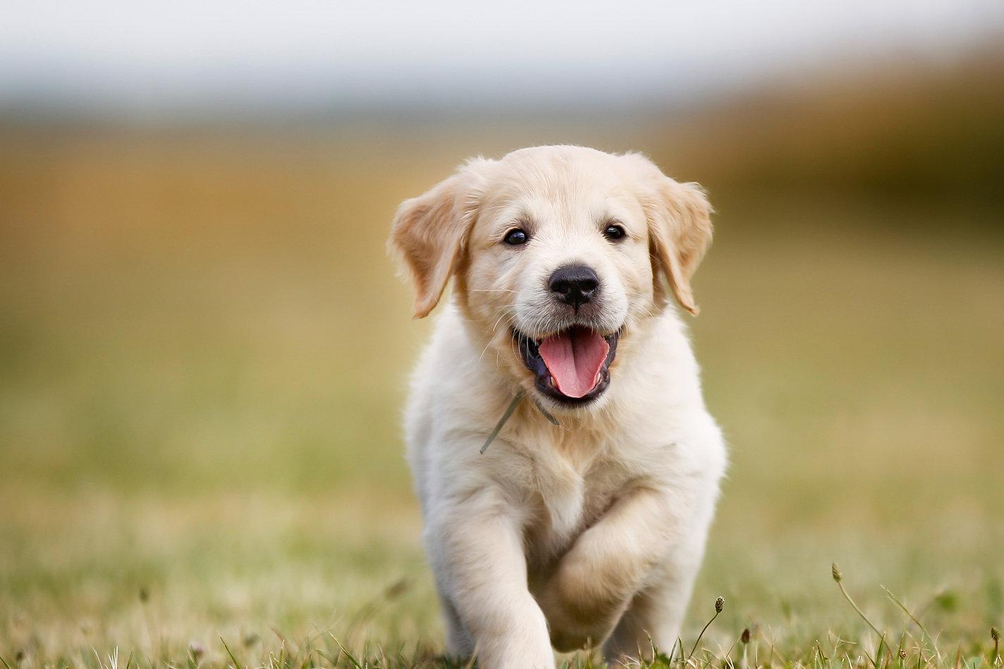 Cachorros: Roer, Adaptar, Socializar