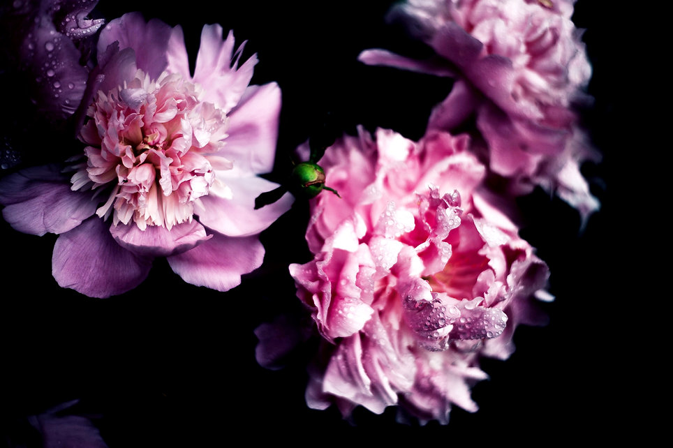 Pink%20Blossom_edited.jpg