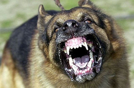 Deparei-me com um cão agressivo. E agora?