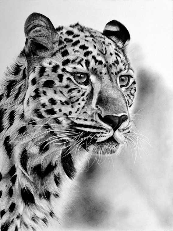 The Majestic Beauty