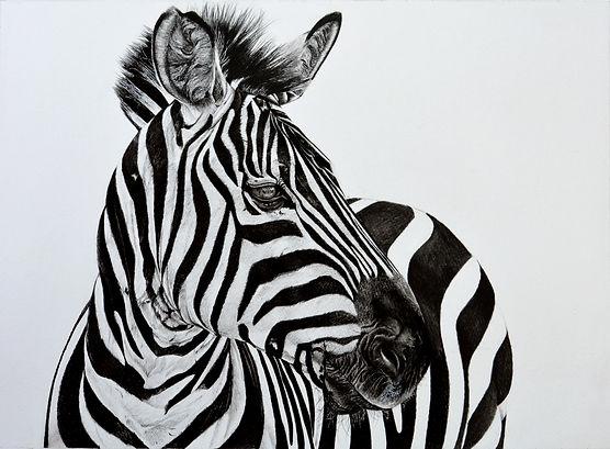 zebra (1)_1_final.jpg