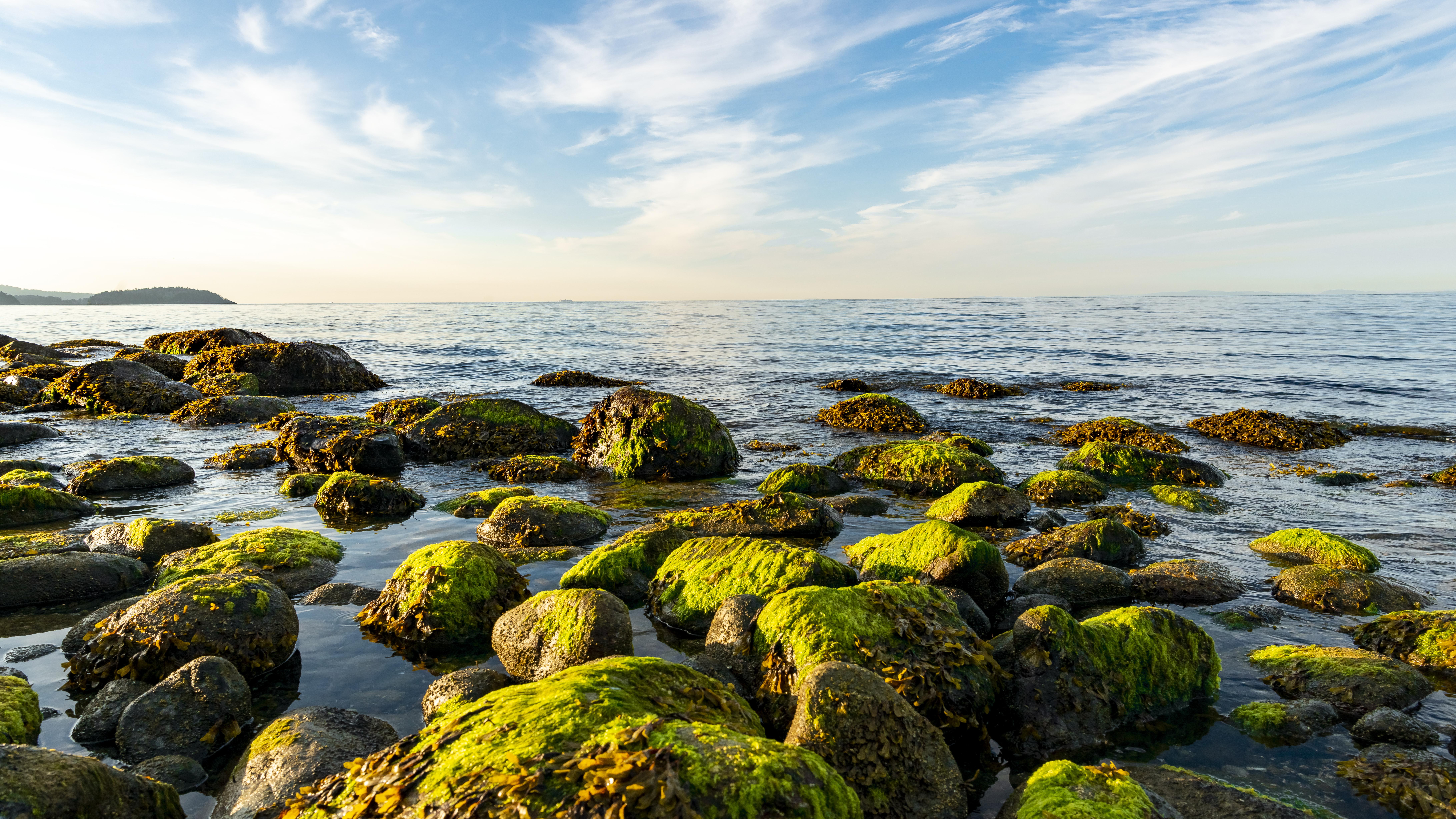 Mossy Rocks at Shore