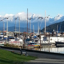 Gibsons Harbour with geese