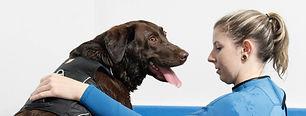 Hydrotherapie voor honden , labrador, ov
