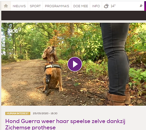 reportage hond prothese .png