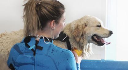 Honden hydrotherapie bremersbos