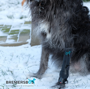 polsbrace voorpoot hond artrose.png