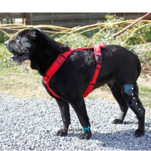 kniebrace hond  partiële kruisbandenruptuur .png