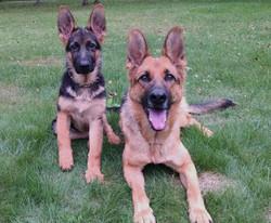 Nika and Baja