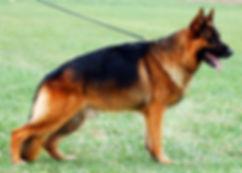 German Shepherd Breeder Minnesota