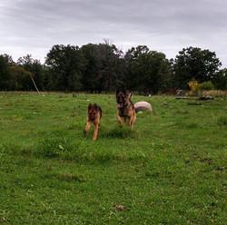 Happy dogs 2.jpg