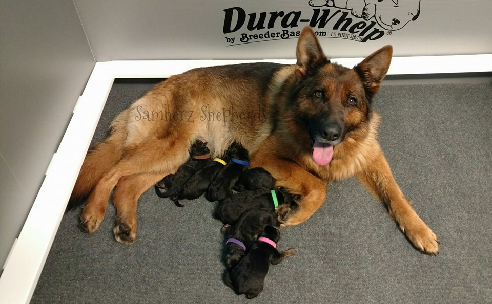 Happy mama D litter