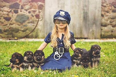 Minnesota German shepherd puppies