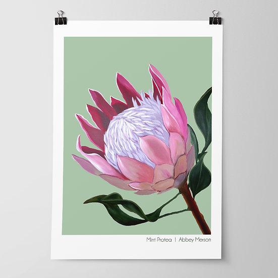 'Mint Protea' Print by Abbey Merson