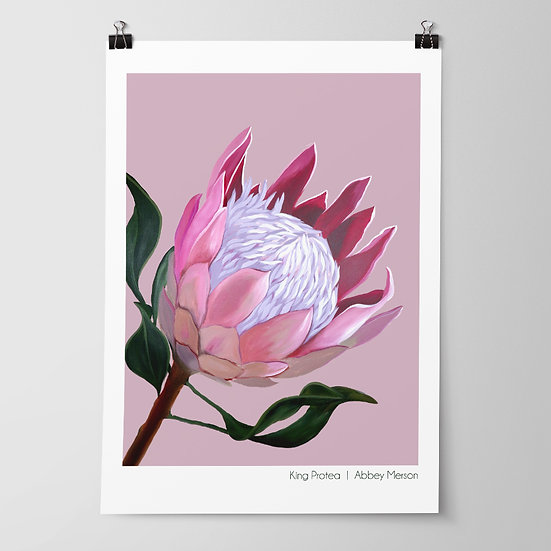 'King Protea' Print by Abbey Merson