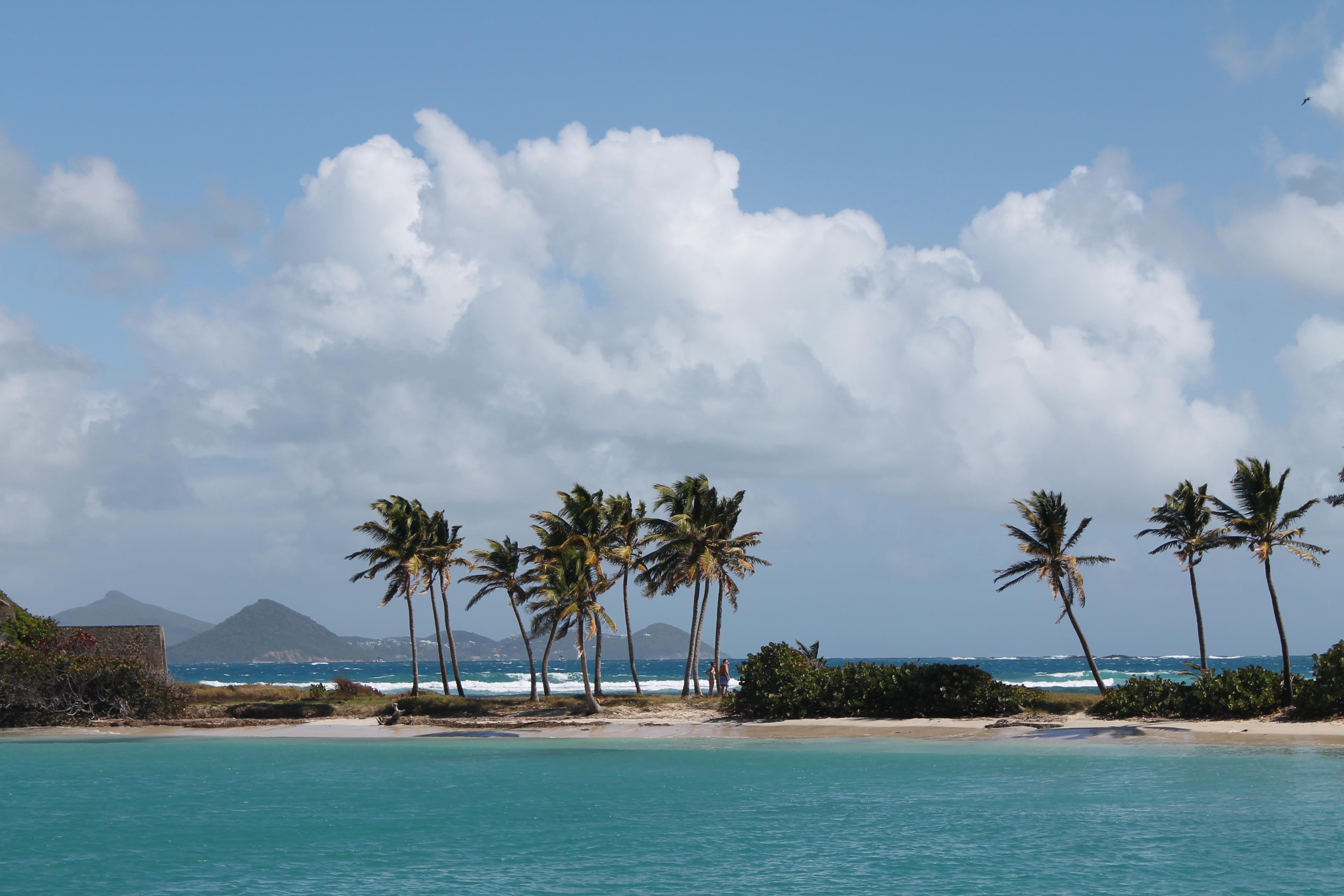 Palmen und Kokosnüsse