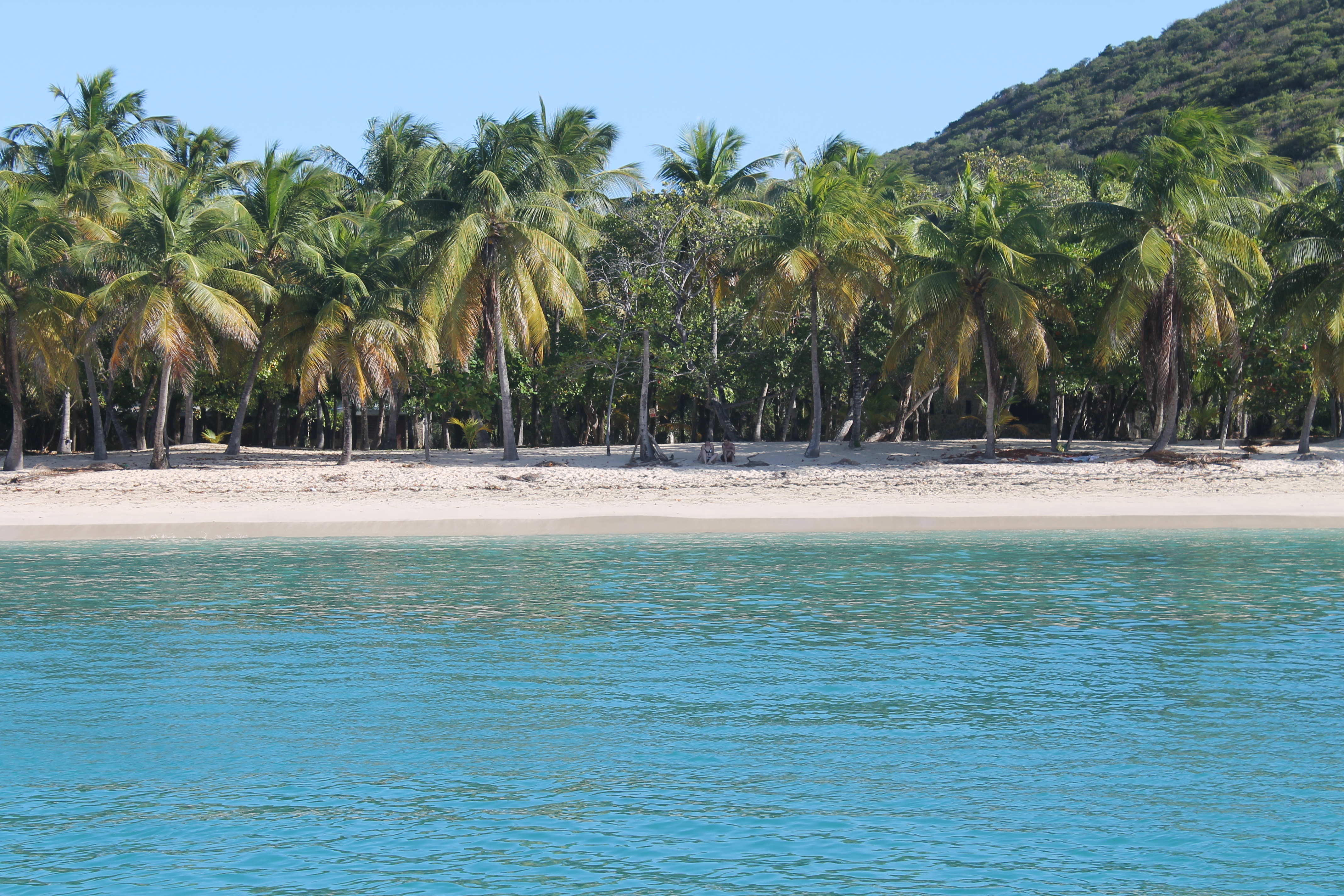 Palmen Strand und Meer