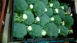 Surplus vegetables. Help reduce food poverty.