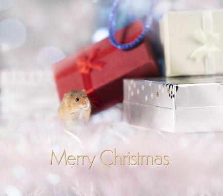 Trai Anfield harvest mouse presents xmas