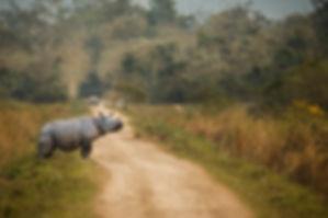 Indian one horned rhino Kaziranga-.jpg