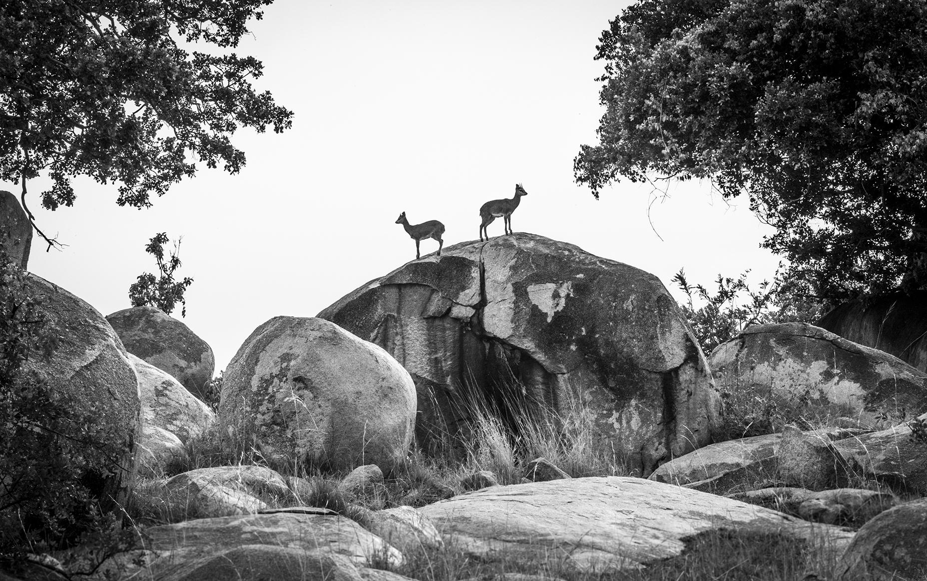 trai anfield photographic safaris -5629_