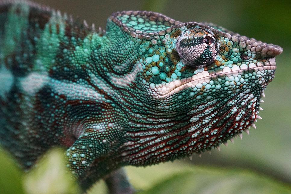 Madagascar Wildlife Photography Safari Trai Anfield chameleon