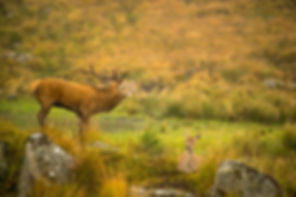 Red Stag_PH_DSC_7618_WEB.jpg