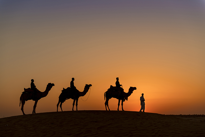 camel safari-3866_WEB