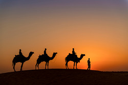 camel safari-3866_WEB