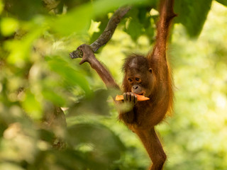 Borneo: Beautiful But Brutalised