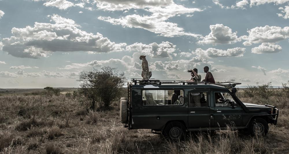Kenya cheetah on vehicle wide-5540.jpg