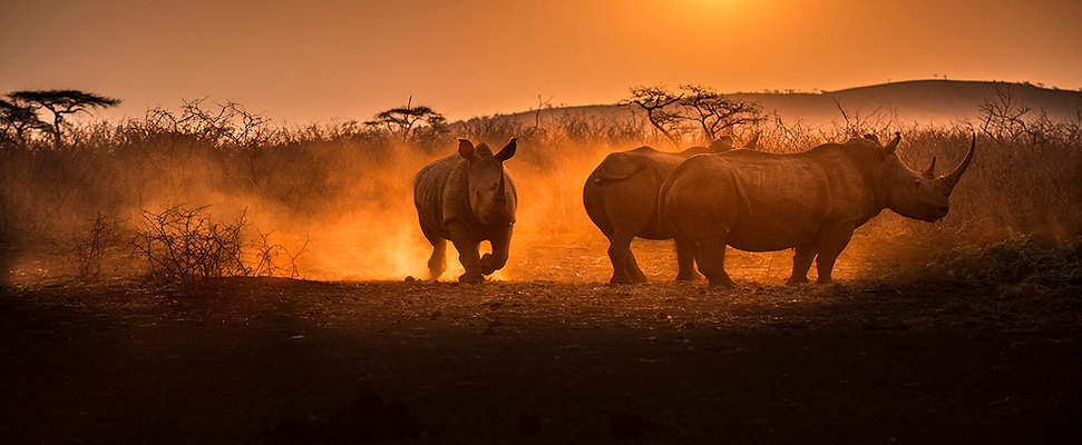 Nature TTL cover pic Rhinos-4330.jpg