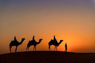 camel safari-3866_WEB.jpg