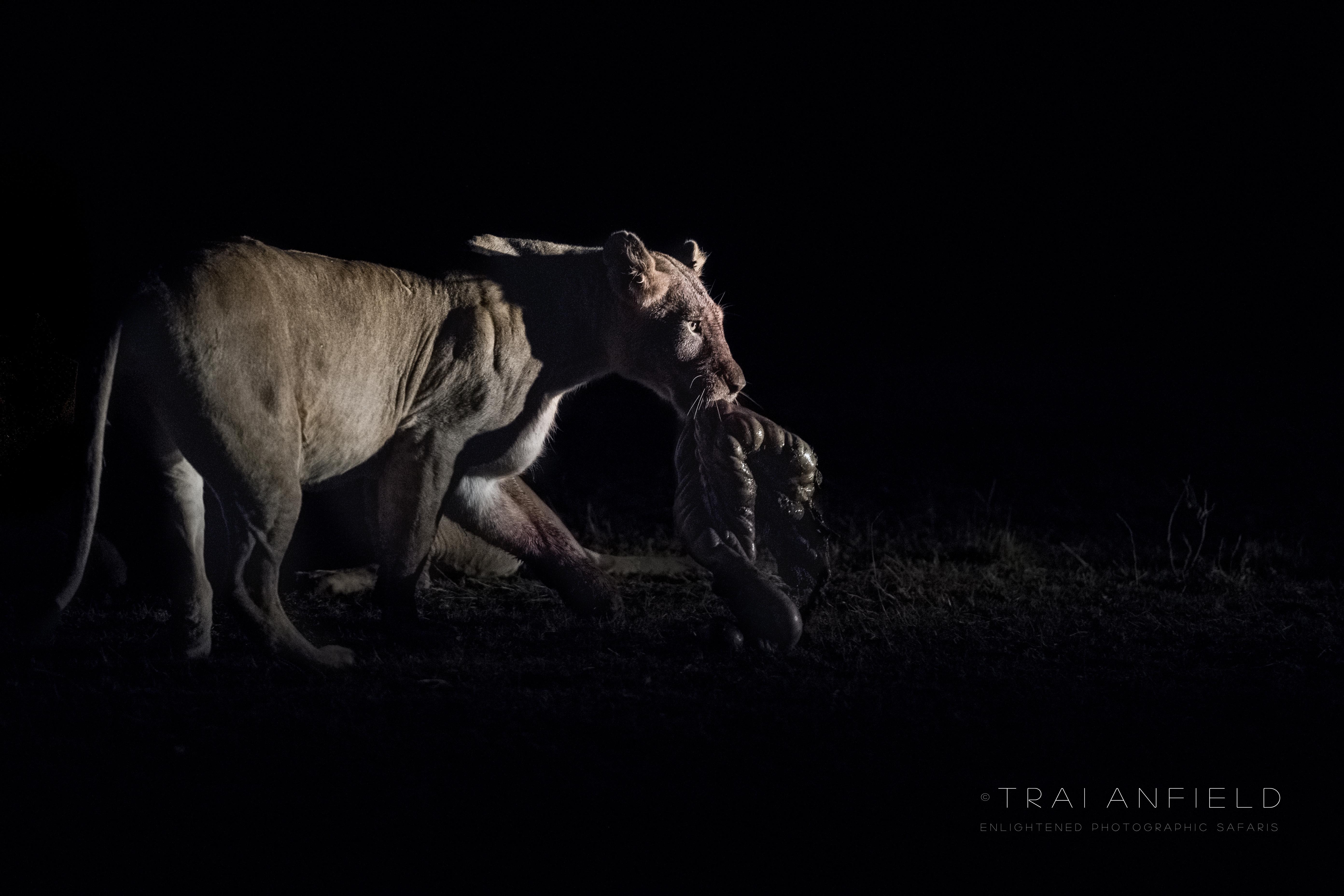 Trai Anfield Enlightened Photographic Safaris Kenya Serian lion kill-8393-WEB.jpg