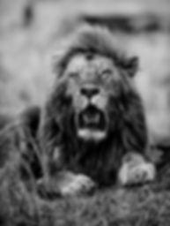 Trai Anfield Photographic Safaris male l