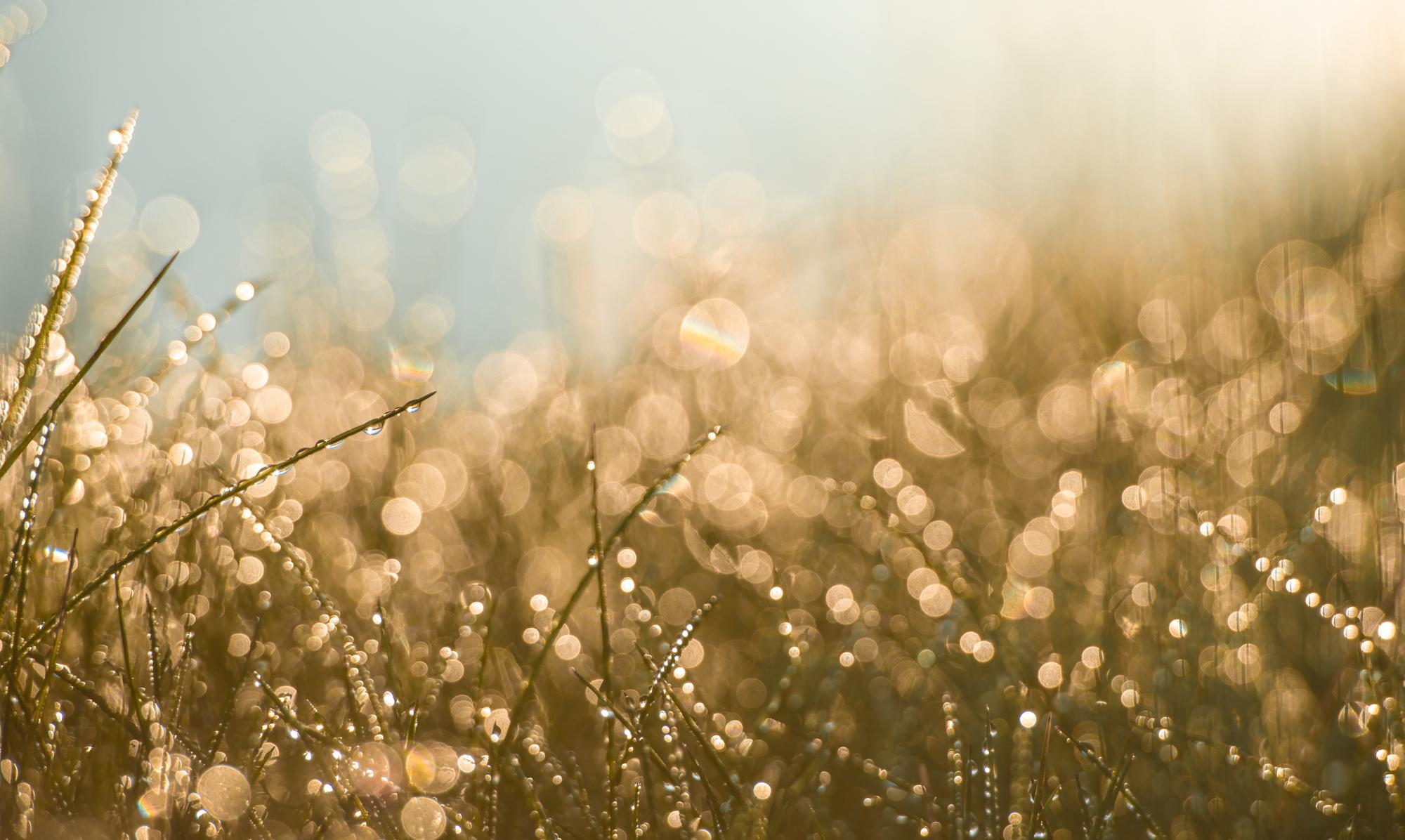 Gonna Be A Lovely Day_DSC4305