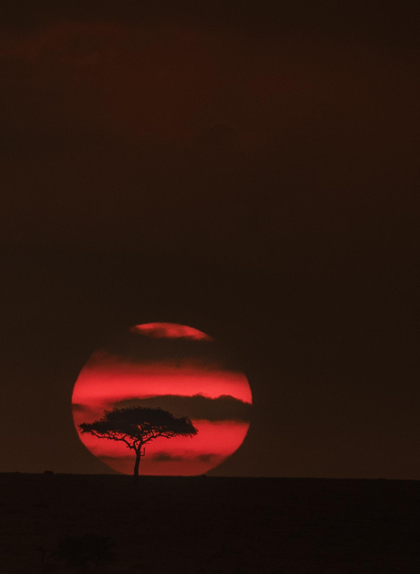 sunrise tree-1450