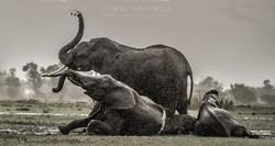 Trai Anfield Enlightened Photographic Safaris Kenya Serian rain elephants-1034_WEB.jpg