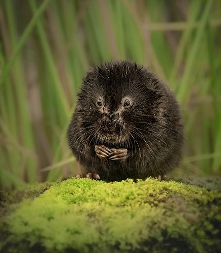 British Wildlife 3 Days: 4, 5, 6 June 2021