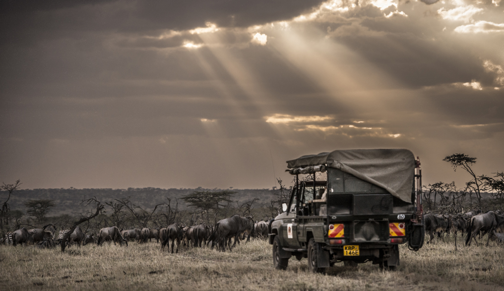 _DSC5119Maasai Mara Kenya.jpg