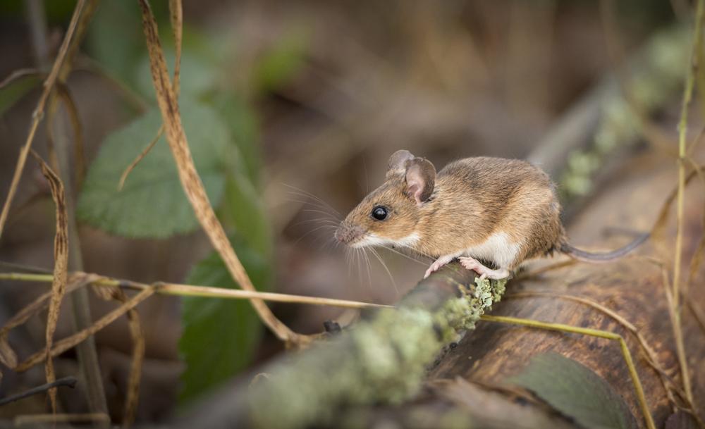 lw wood mice-0445.jpg