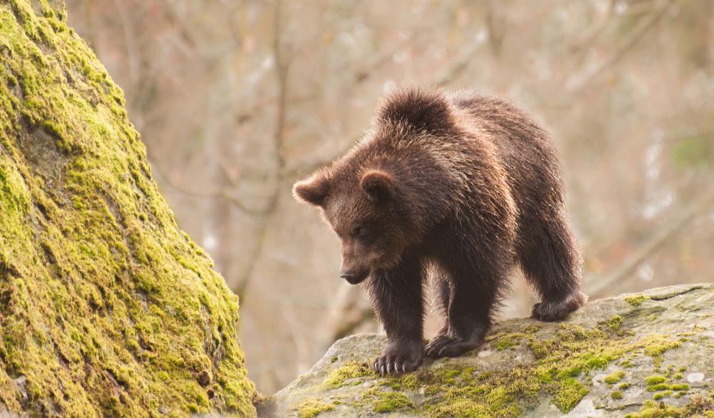 bear-2095.jpg