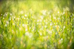 morning dew bokeh_WEB_WM-7450