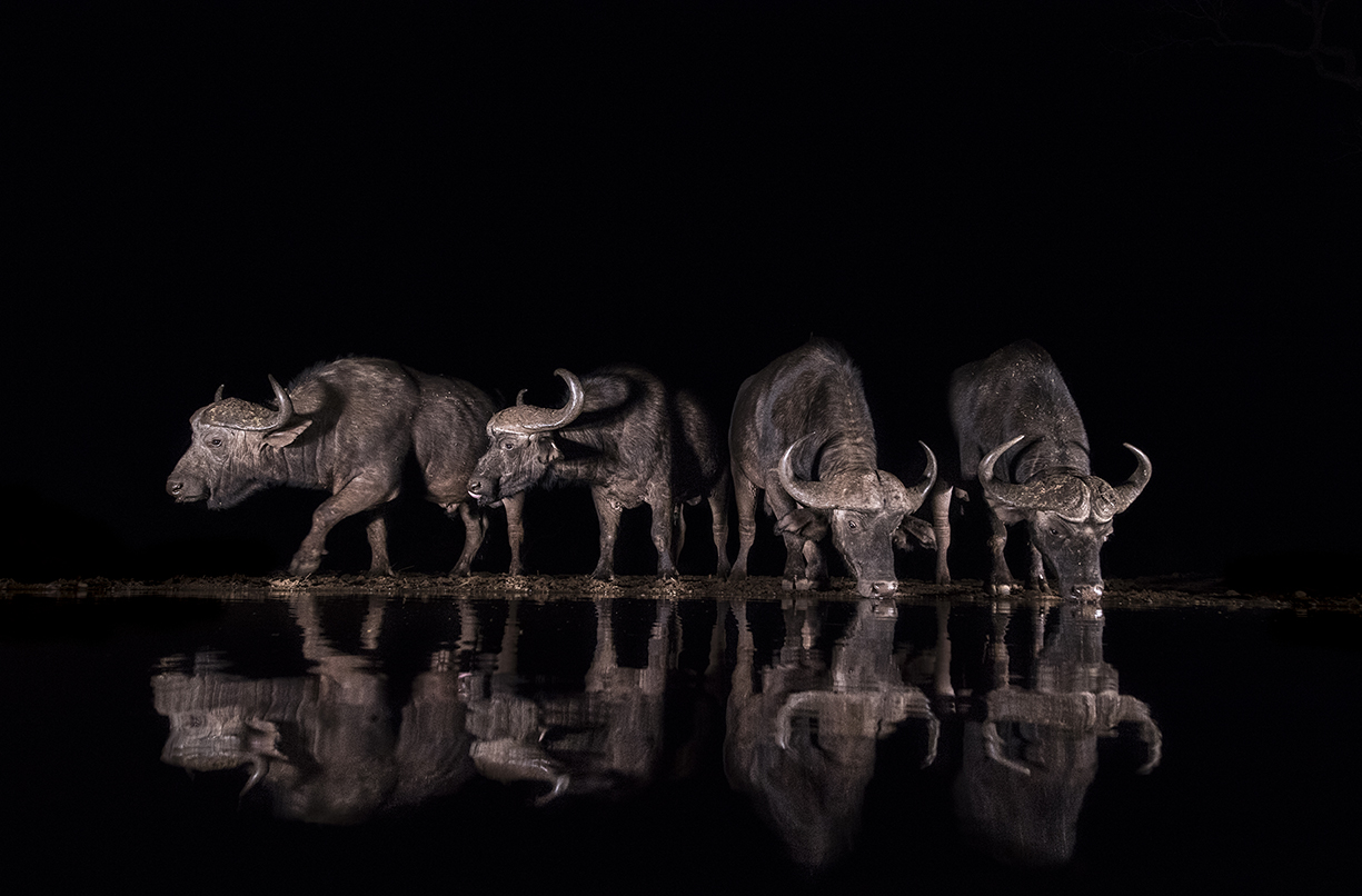 Zimanga buffalo night b&w edit-6283_WEB.jpg