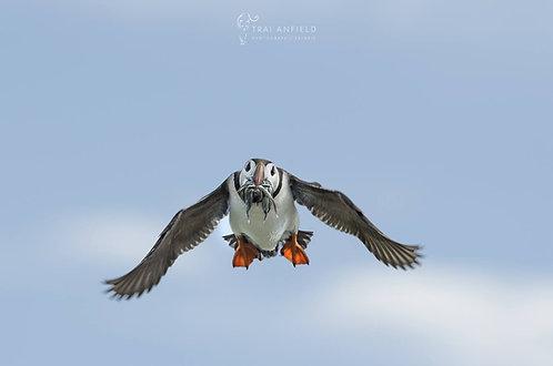 Farne Islands Summer Seabirds - 15 JUNE 2021