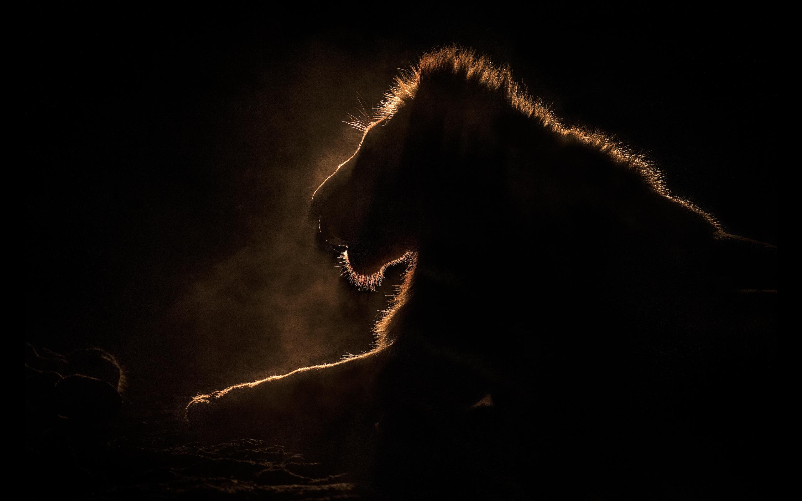 Dark Wall - Night Hunter
