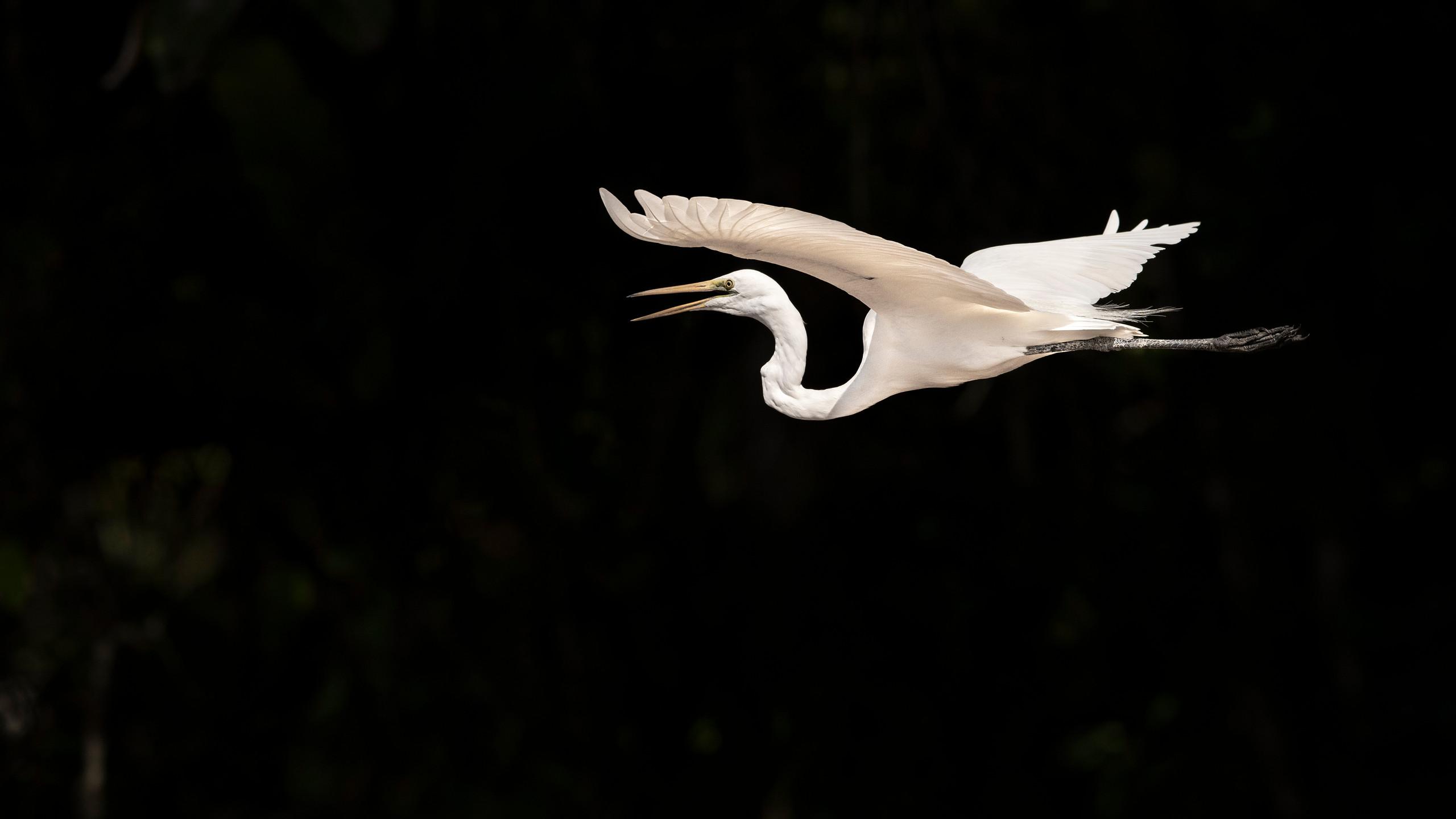 trai anfield photographic safaris egret